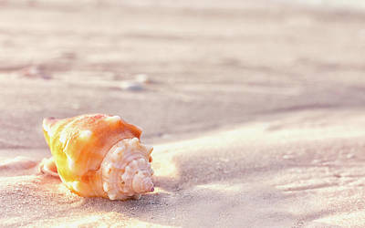 Photograph - Fighting Conch On The Beach by Framing Places