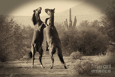 Photograph - Fighting Stallions by Frank Stallone