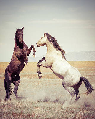 Art Print featuring the photograph Fighting Stallions by Mary Hone