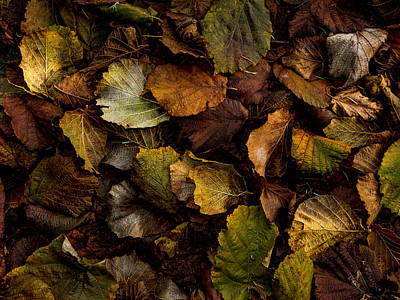 Photograph - Filbert Leaf Pattern by Jean Noren