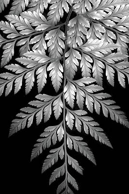 Photograph - Filigree Fern II by Jessica Jenney