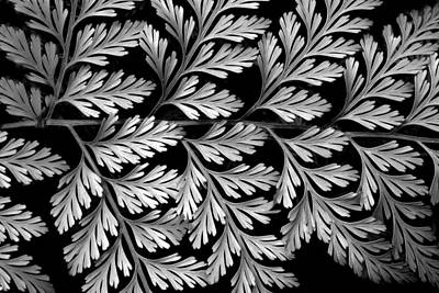 Photograph - Filigree Fern by Jessica Jenney