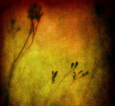 Filigree Photograph - Filigree Flower by Susanne Van Hulst