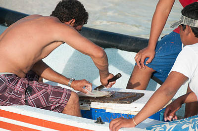 Purely Purple - Filleting Fish at Isla Mujeres by Carol Ailles