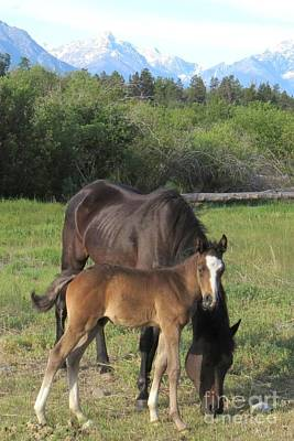 Photograph - Filly And Colt by Frank Townsley