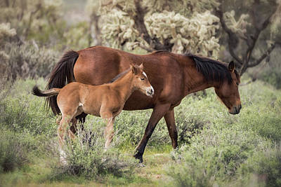 Photograph - Filly Following In Footsteps  by Saija Lehtonen