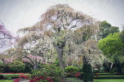 Photograph - Filoli Flowering Tree by Patricia Dennis