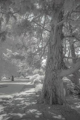 Photograph - Filoli In The Distance by Patricia Dennis