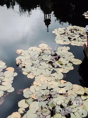 Photograph - Filoli Reflections by Laura Hamill