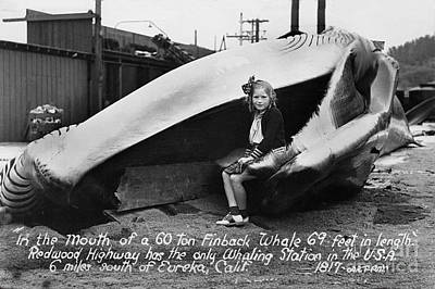 Photograph - Fin Whale 69 Feet Long At Fields Landing Whaling Station Circa 1945 by California Views Archives Mr Pat Hathaway Archives