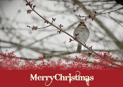 Mixed Media - Finch Christmas by Trish Tritz