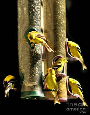 Photograph - Finch Feeding Frenzie by Barbara S Nickerson