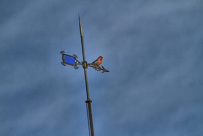 Photograph - Finch On Vane by Alana Thrower