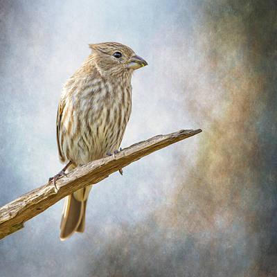 Finch Digital Art - Finch Perched On Blues by Bill Tiepelman