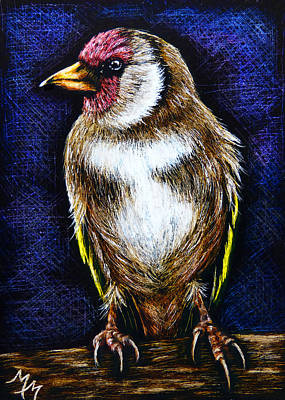 Drawing - Finch - Sa95 by Monique Morin Matson