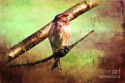 Painting - Finch Songbird On Cherry Tree Burl  by Christina VanGinkel