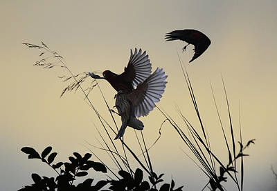 Katharine Hepburn - Finches Silhouette with Leaves 4  by Linda Brody