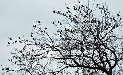 Photograph - Finches To The Wind by Michael Dillon