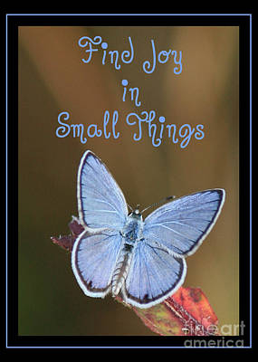 Finding Happiness Photograph - Find Joy In Small Things by Carol Groenen