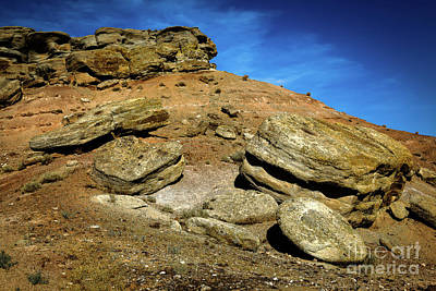 Photograph - Find The Dinosaur by Jon Burch Photography