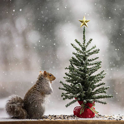 Christmas Squirrels Wall Art - Photograph - Find The Magic In Christmas Square by Terry DeLuco