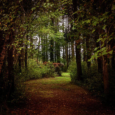 Photograph - Find Your Path Square by Terry DeLuco