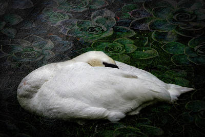 Photograph - Finding Rest In Nature by Debra and Dave Vanderlaan