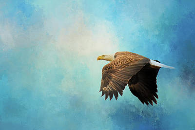 Photograph - Finding The Sun Bald Eagle Art by Jai Johnson