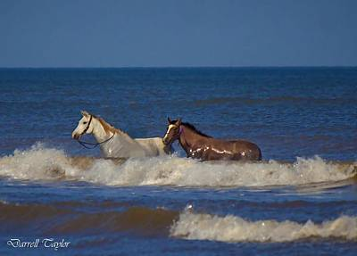 Fine Art America Pic 117 Horses At Surfside Print by Darrell Taylor