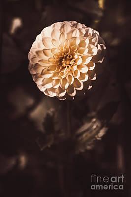 Fine Art Floral Photo. Orange Dahlia Flower Art Print
