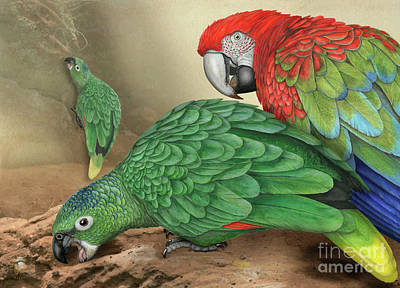 Painting - Mealy Amazon Parrot-amazona Farinosa-harinosa Surena-green-winged Macaw-ara Chloroptera-guacamayo by Urft Valley Art