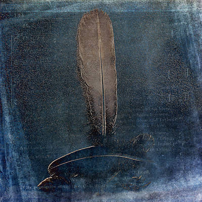 Photograph - Fine Feathers by Randi Grace Nilsberg