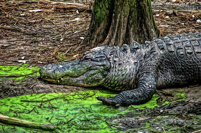 Photograph - Fine Wine Cafe Alligator by Aimee L Maher Photography and Art Visit ALMGallerydotcom