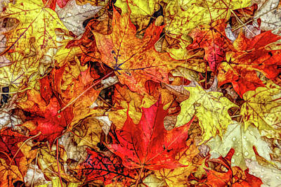 Photograph - Fine Wine Cafe Autumn Leaves by Aimee L Maher Photography and Art Visit ALMGallerydotcom