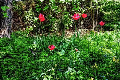 Photograph - Fine Wine Cafe Backyard Tulips by Aimee L Maher Photography and Art Visit ALMGallerydotcom