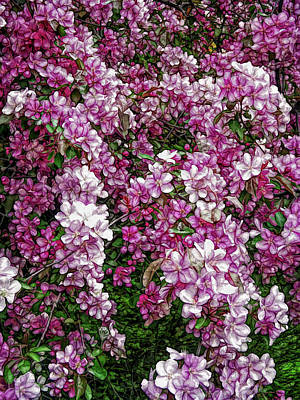 Easter Photograph - Fine Wine Cafe Beautiful Blossoms by Aimee L Maher Photography and Art Visit ALMGallerydotcom