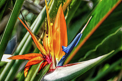 Photograph - Fine Wine Cafe Bird Of Paradise by Aimee L Maher Photography and Art Visit ALMGallerydotcom