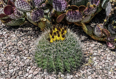 Photograph - Fine Wine Cafe Budding Cactus by Aimee L Maher Photography and Art Visit ALMGallerydotcom