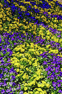 Photograph - Fine Wine Cafe Colorful Garden by Aimee L Maher Photography and Art Visit ALMGallerydotcom