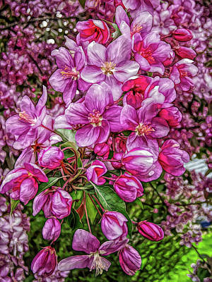 Photograph - Fine Wine Cafe Crab Apple Blossoms by Aimee L Maher Photography and Art Visit ALMGallerydotcom