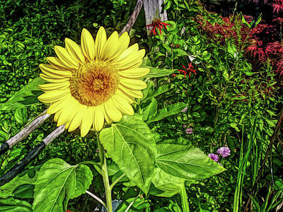 Photograph - Fine Wine Cafe Garden Sunflower by Aimee L Maher Photography and Art Visit ALMGallerydotcom