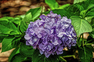 Photograph - Fine Wine Cafe Hydrangea by Aimee L Maher ALM GALLERY