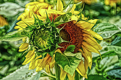Photograph - Fine Wine Cafe Joyous Sunflower by Aimee L Maher ALM GALLERY