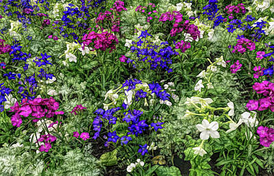 Photograph - Fine Wine Cafe Mixed Flower Garden by Aimee L Maher Photography and Art Visit ALMGallerydotcom