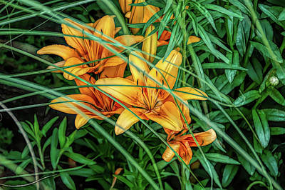 Photograph - Fine Wine Cafe Orange Tiger Lilies by Aimee L Maher Photography and Art Visit ALMGallerydotcom