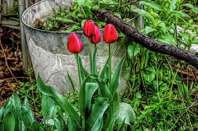 Artistic Photograph - Fine Wine Cafe Red Tulips by Aimee L Maher Photography and Art Visit ALMGallerydotcom