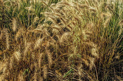 Photograph - Fine Wine Cafe Summer Wheat by Aimee L Maher Photography and Art Visit ALMGallerydotcom