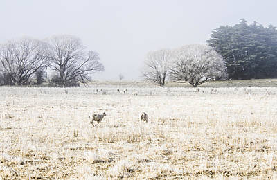 Winter Landscapes Photograph - Fingal Winter Farmyard by Jorgo Photography - Wall Art Gallery