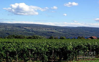 Photograph - Finger Lakes Ny Wine Country Vineyards by Rose Santuci-Sofranko