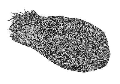 Fingerprint Drawing - Fingerprint by Trish Sierer